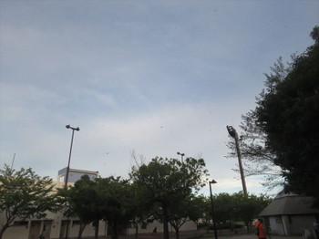 Img_2012_r_14